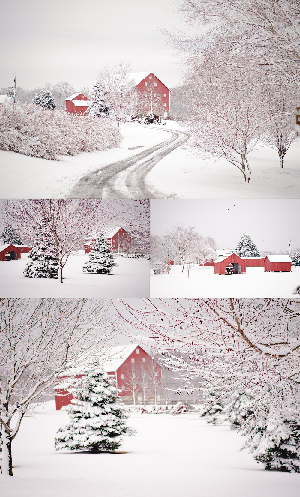 First Snow 2013-Collage-1